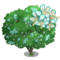 Gordonia Tree-icon