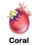 Coral egg.png