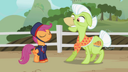 Telegram Scootaloo &amp; Granny Smith S2E12