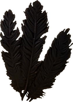 Hagraven feathers