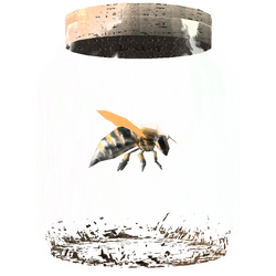 TESV Bee In A Jar Crop