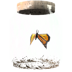 TESV Butterfly In A Jar Crop