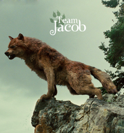 Team-Jacob-fire-and-ice-the-wolf-pack-20286792-405-432