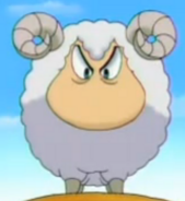 Sheep Amon