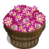 Holiday Cactus Bushel-icon