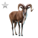 Item urial silver 01