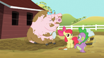 Spike and Apple Bloom washing pig S03E09