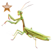 Item preyingmantis bronze 01
