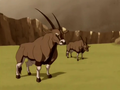 Gemsbok bull.png