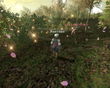 FFXI Dream Flower