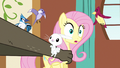 Fluttershy being snatched S3E13.png