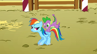 Spike on the back of Rainbow Dash S1E13