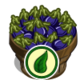 Organic Eggplant Bushel-icon