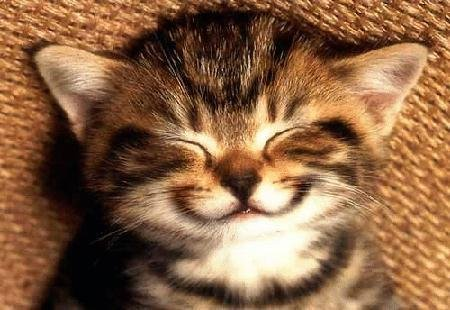 Smily cat