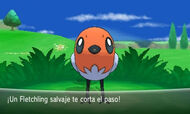 Fletchling salvaje