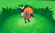 Fletchling en combate
