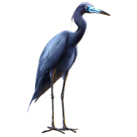 Huge item littleblueheron 01