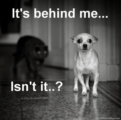 ... -meme-scary-black-cat-dog-meme-funny-animals-funny-pictures_thumb.jpg