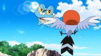 ¡Froakie VS Fletchling! ¡¡Maniobrando en un combate aéreo!!