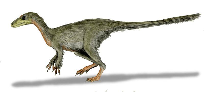 Coelurosaurus