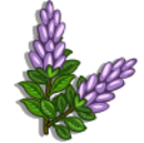 Licorice Plant-icon.png