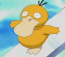 Psyduck Misty