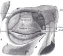 Lacrimal sac