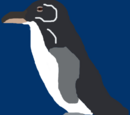 Costa Rican Penguin