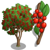 Giant Possumhaw Holly Tree-icon