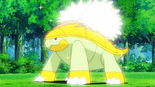 Pokemon Grotle Wwwimagessurecom