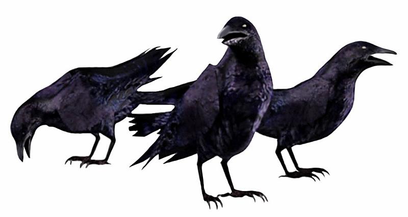 Resultado de imagen de cuervos png