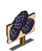 60px-Blackberry_Mastery_Sign-icon.png