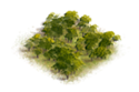 125px-Woods2.png