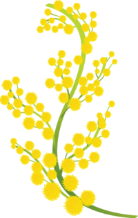 200px-Mimosa_Branch_for_NHB_02.png