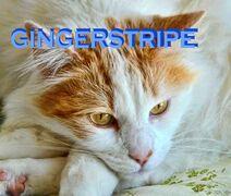 212px-Gingerstripe.jpg
